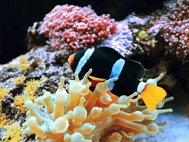 Potápanie v indickom oceáne v Keni