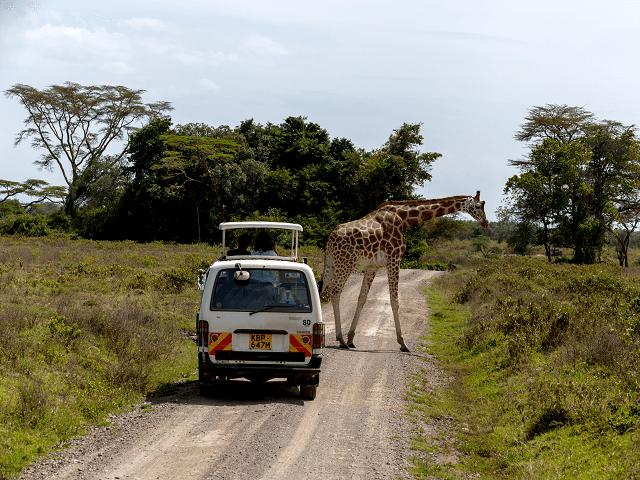Safari v Národnom parku Masai Mara, Keňa, Afrika